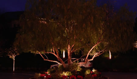 Sacramento Landscape Lighting